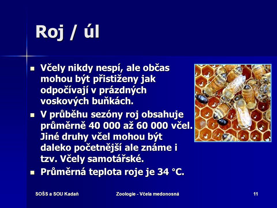 SOŠS a SOU KadaňZoologie - Včela medonosná10 Trubci Trubci jsou samečci, kteří oplodní královnu. Trubci jsou samečci, kteří oplodní královnu. Rodí se