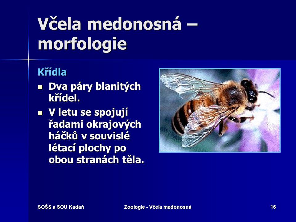 SOŠS a SOU KadaňZoologie - Včela medonosná15 Včela medonosná – morfologie Ústní ústrojí Kousací funkci mají kusadla. Kousací funkci mají kusadla. Čeli