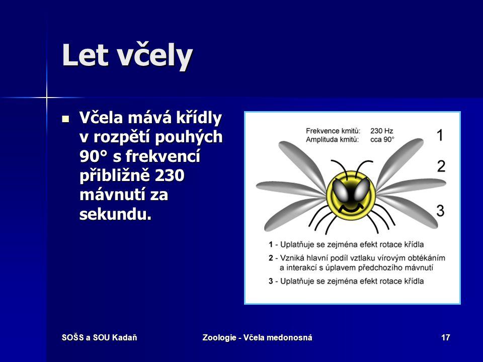 SOŠS a SOU KadaňZoologie - Včela medonosná16 Včela medonosná – morfologie Křídla Dva páry blanitých křídel. Dva páry blanitých křídel. V letu se spoju