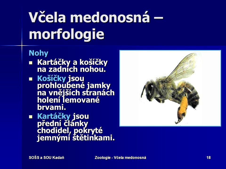SOŠS a SOU KadaňZoologie - Včela medonosná17 Let včely Včela mává křídly v rozpětí pouhých 90° s frekvencí přibližně 230 mávnutí za sekundu. Včela máv
