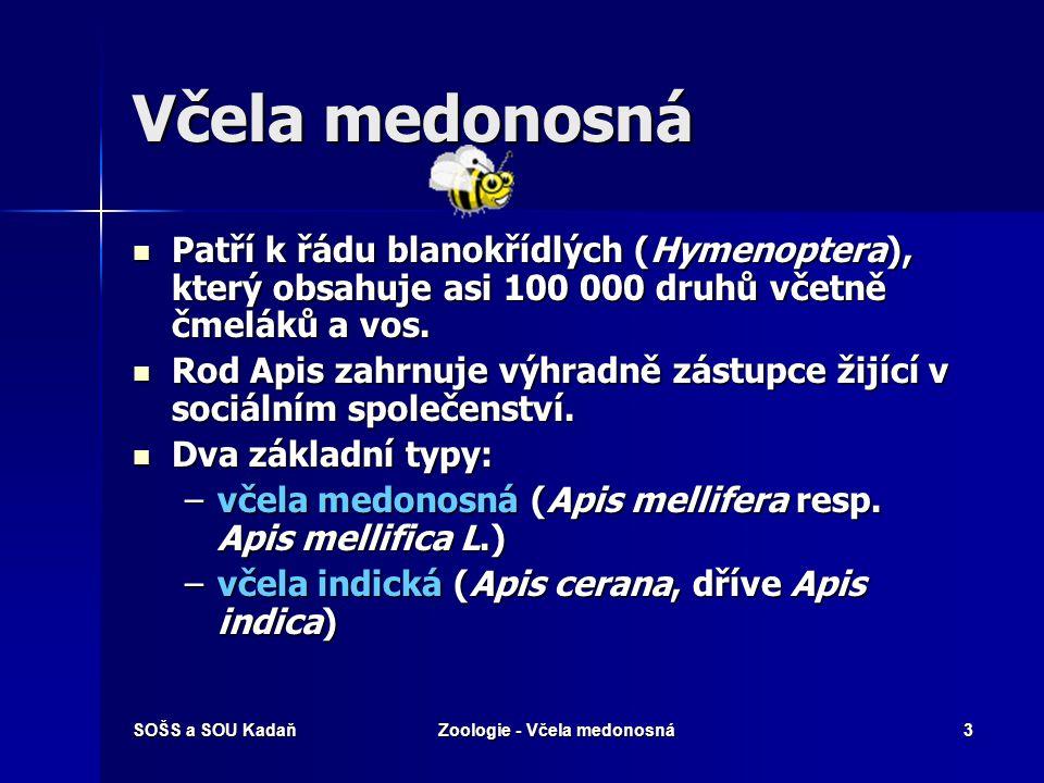 SOŠS a SOU KadaňZoologie - Včela medonosná3 Včela medonosná Patří k řádu blanokřídlých (Hymenoptera), který obsahuje asi 100 000 druhů včetně čmeláků a vos.
