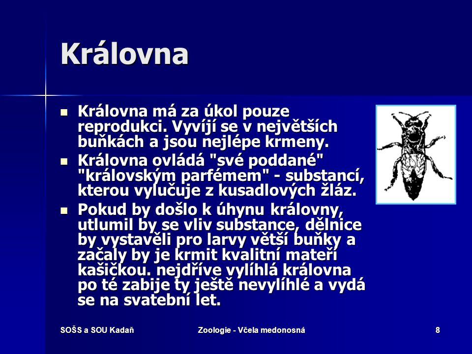 SOŠS a SOU KadaňZoologie - Včela medonosná8 Královna Královna má za úkol pouze reprodukci.