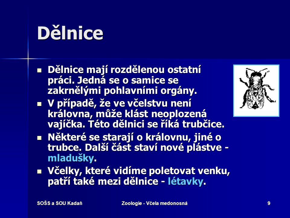 SOŠS a SOU KadaňZoologie - Včela medonosná19 Žihadlo s jedovým váčkem Žihadlo s jedovým váčkem Žihadlo s jedem mají pouze dělnice.