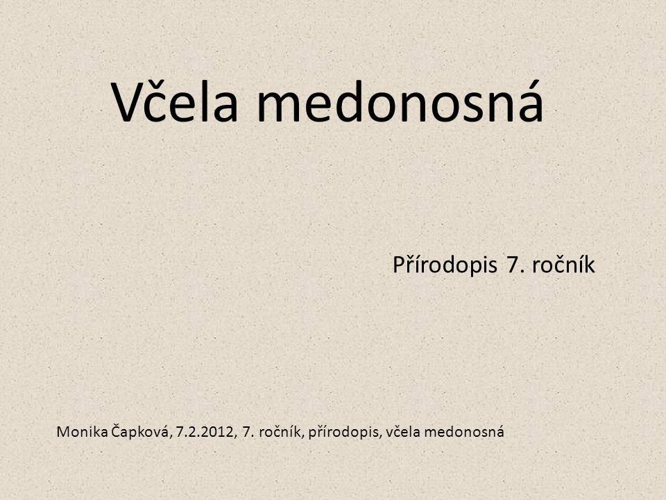 Včela medonosná Přírodopis 7. ročník Monika Čapková, 7.2.2012, 7. ročník, přírodopis, včela medonosná