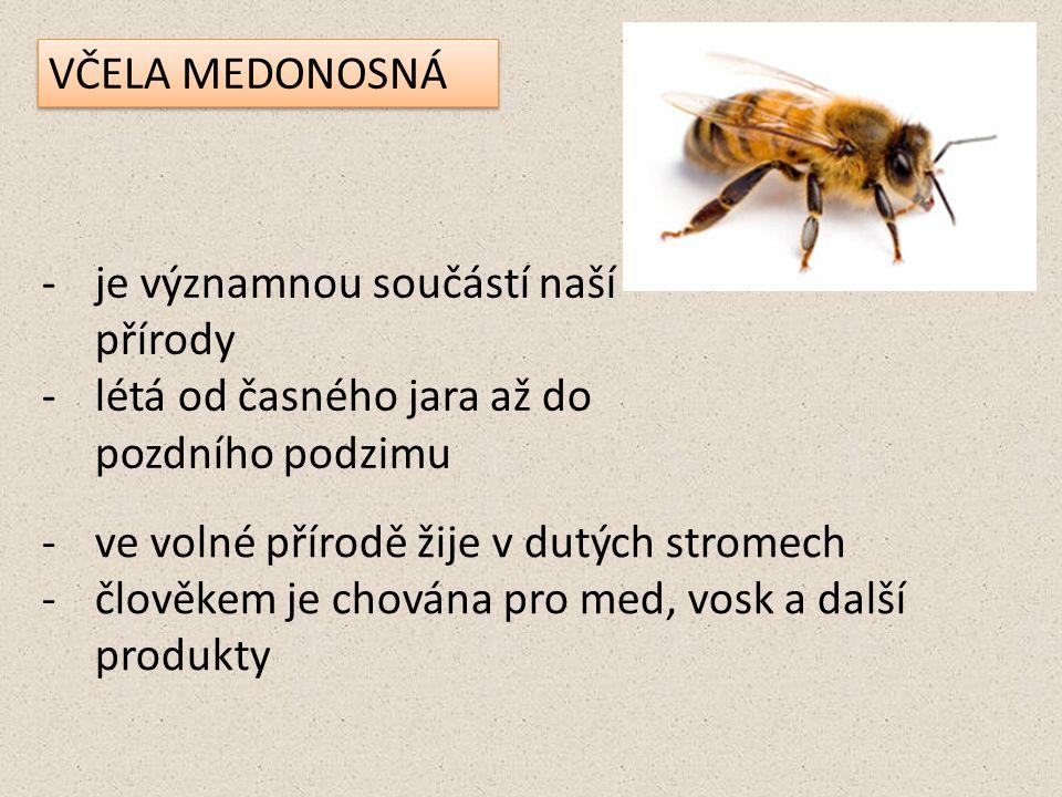 -je významnou součástí naší přírody -létá od časného jara až do pozdního podzimu -ve volné přírodě žije v dutých stromech -člověkem je chována pro med