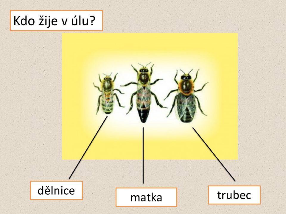 Život v úlu
