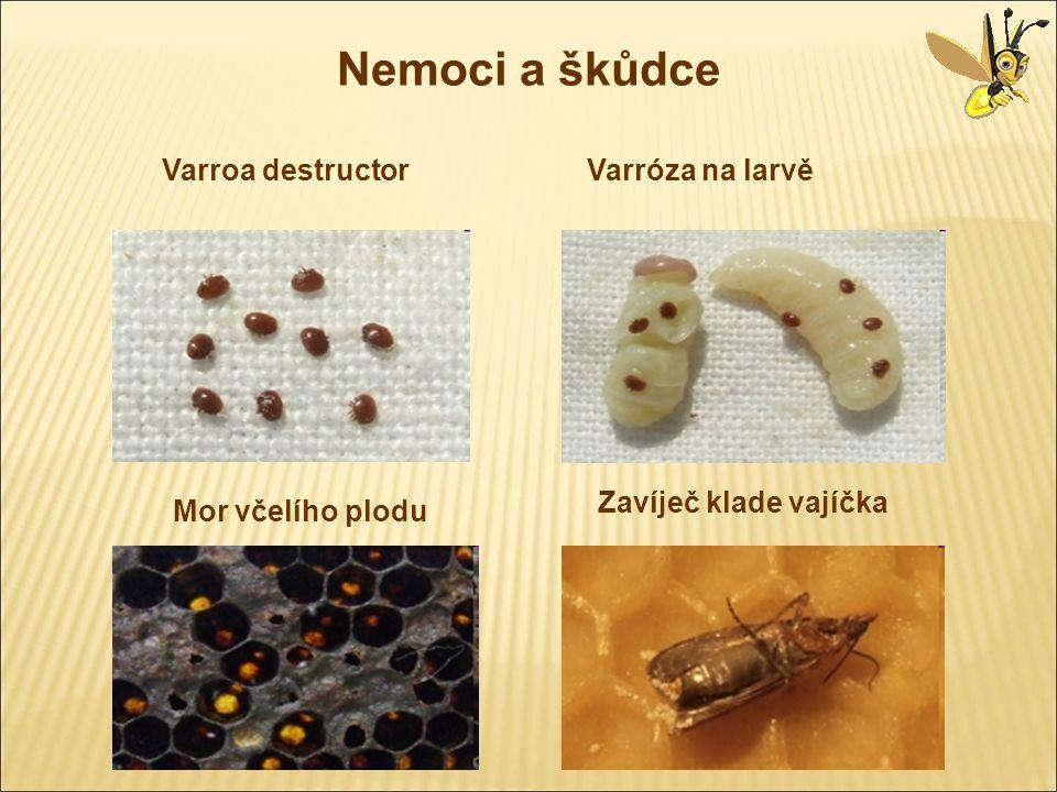 Nemoci a škůdce Varroa destructorVarróza na larvě Mor včelího plodu Zavíječ klade vajíčka