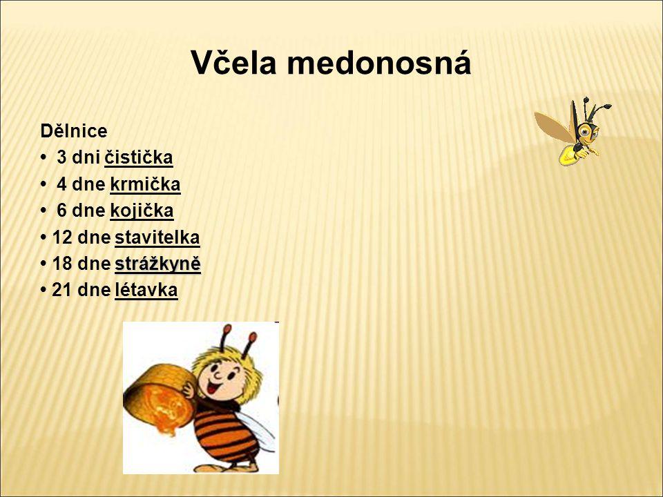 Včela medonosná Včelí úl