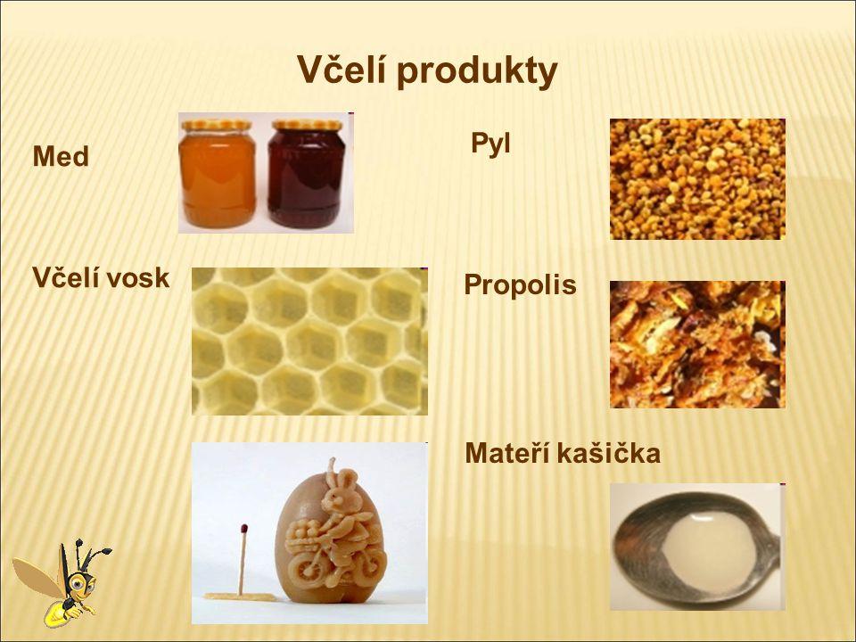 Včelí produkty Med Včelí vosk Pyl Propolis Mateří kašička