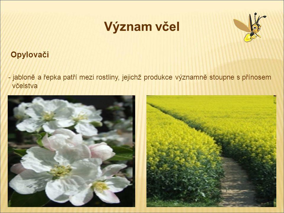 Význam včel Opylovači - jabloně a řepka patří mezi rostliny, jejichž produkce významně stoupne s přínosem včelstva