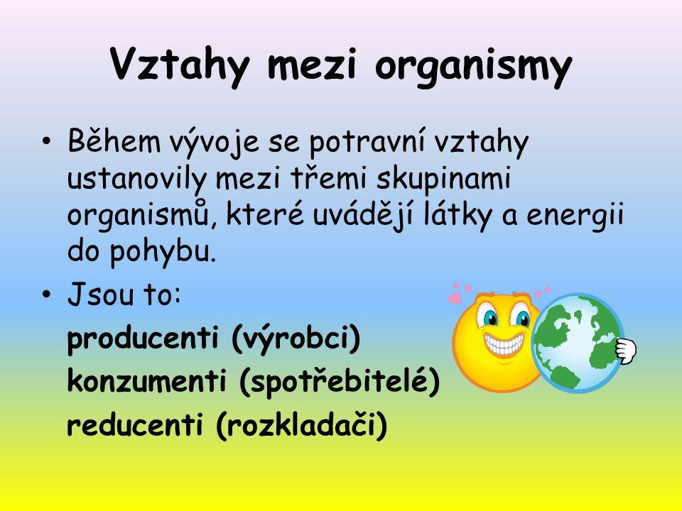 Vztahy mezi organismy Během vývoje se potravní vztahy ustanovily mezi třemi skupinami organismů, které uvádějí látky a energii do pohybu. Jsou to: pro