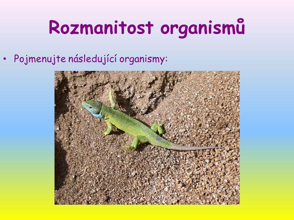 Pojmenujte následující organismy:
