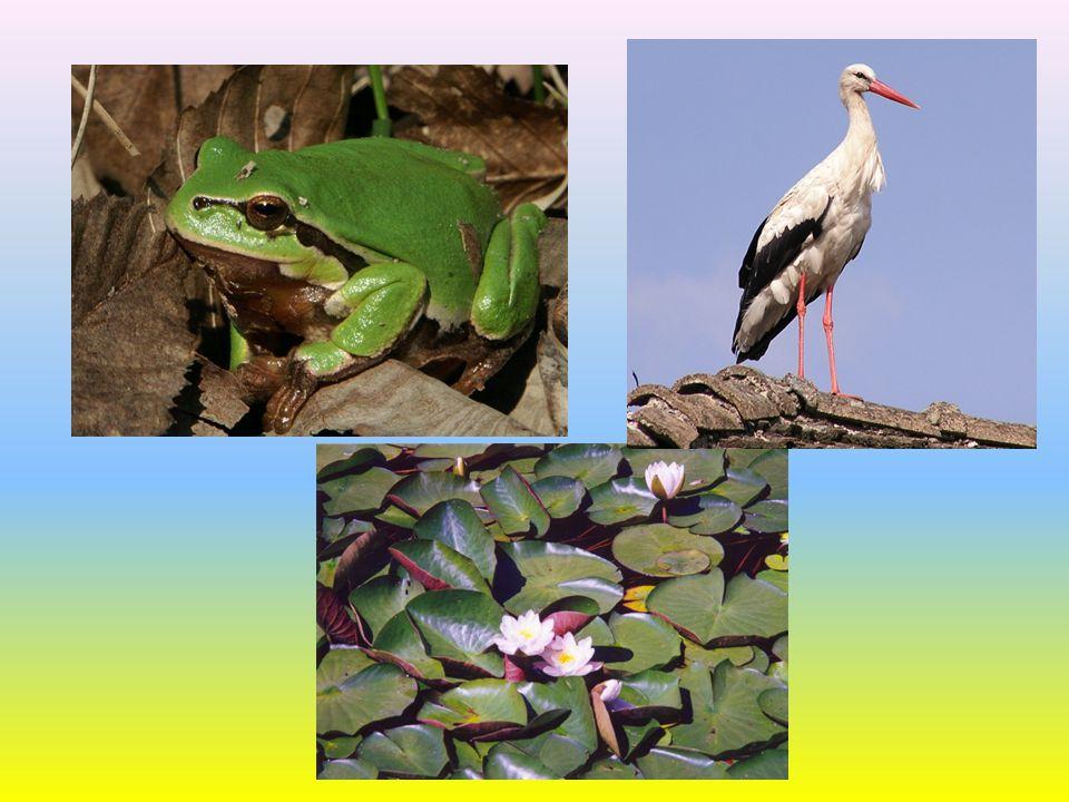 Vztahy mezi organismy Mezi organismy se vyvinuly ještě další vztahy: Predace – živočichové, kteří loví jiné živočichy jako svou potravu, např.