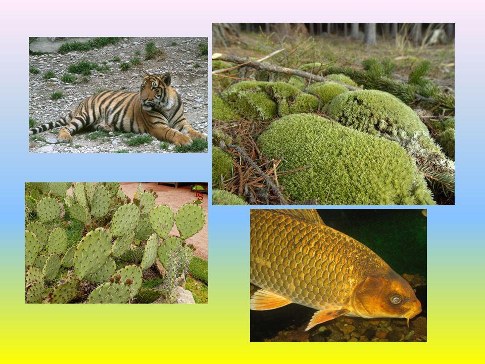 Vztahy mezi organismy - úkoly Sestavte příklad co možná nejdelšího potravního řetězce.