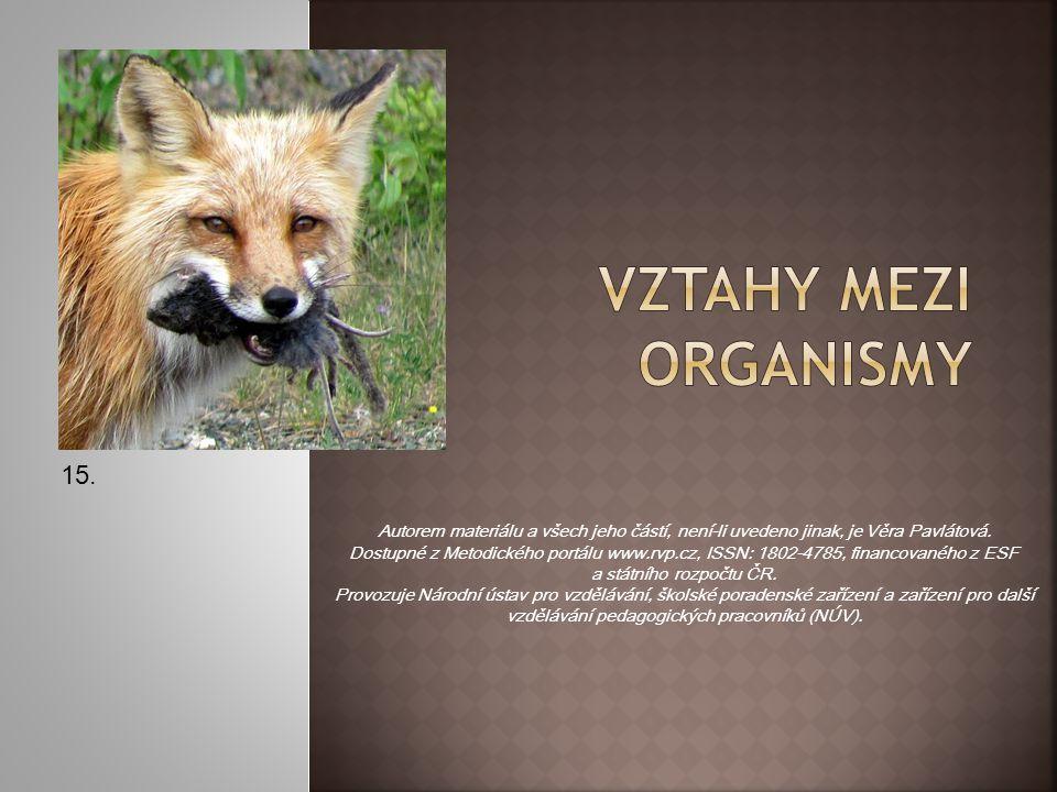 Symbióza je výhodné soužití dvou různých organismů, které si navzájem prospívají.