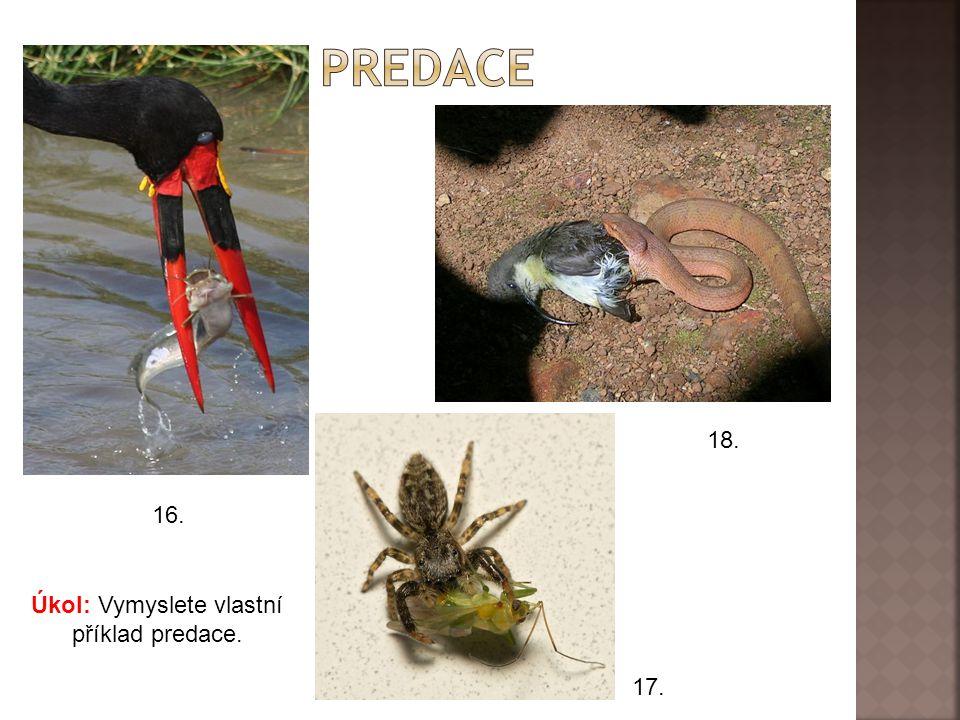  Predátor (= lovec) loví a požírá kořist.  Tento vztah je prospěšný pouze pro lovce. Odkaz na video: http://commons.wikimedia.org/wiki/File:Avicular