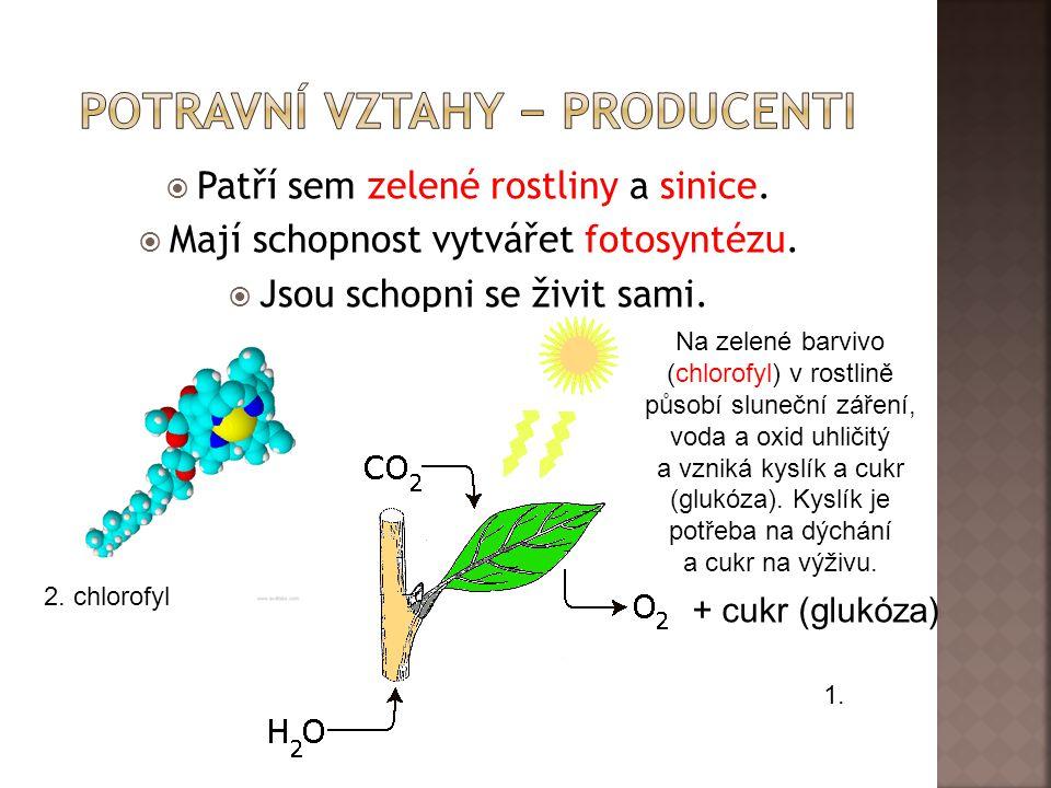  Patří sem zelené rostliny a sinice. Mají schopnost vytvářet fotosyntézu.