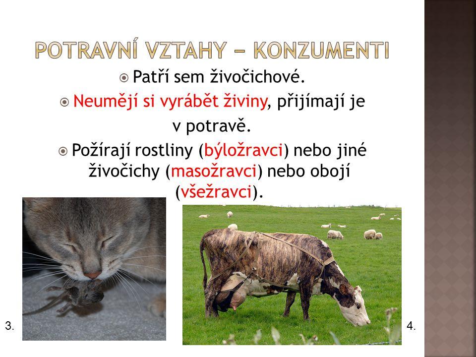  Patří sem živočichové. Neumějí si vyrábět živiny, přijímají je v potravě.