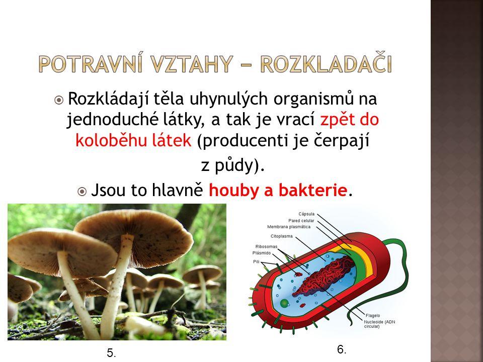  Rozkládají těla uhynulých organismů na jednoduché látky, a tak je vrací zpět do koloběhu látek (producenti je čerpají z půdy).