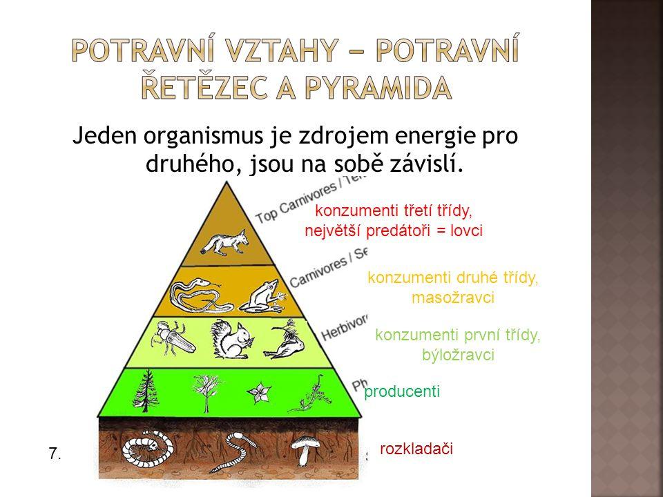 Jeden organismus je zdrojem energie pro druhého, jsou na sobě závislí.