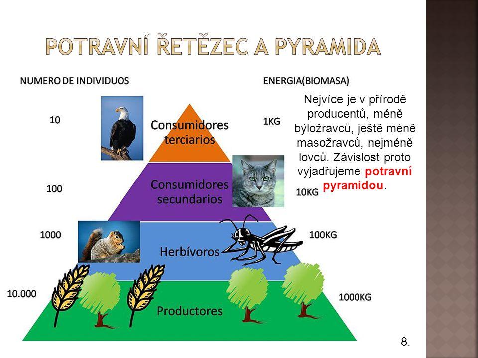 8.Nejvíce je v přírodě producentů, méně býložravců, ještě méně masožravců, nejméně lovců.