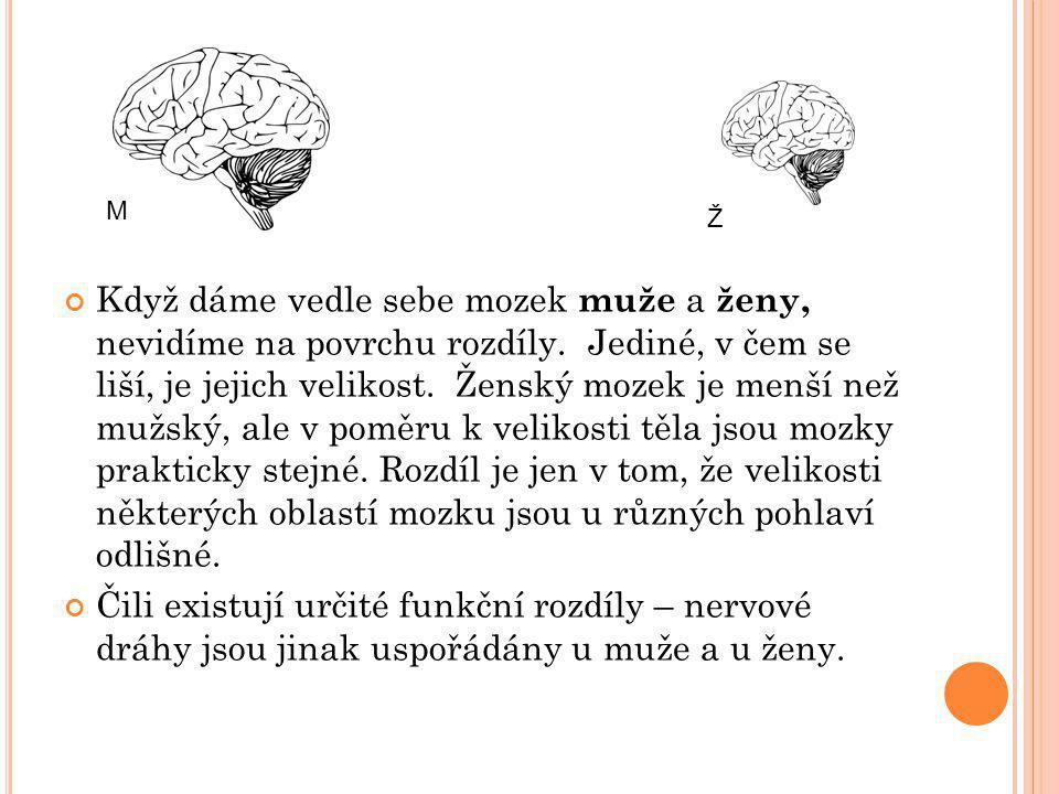 Když dáme vedle sebe mozek muže a ženy, nevidíme na povrchu rozdíly. Jediné, v čem se liší, je jejich velikost. Ženský mozek je menší než mužský, ale