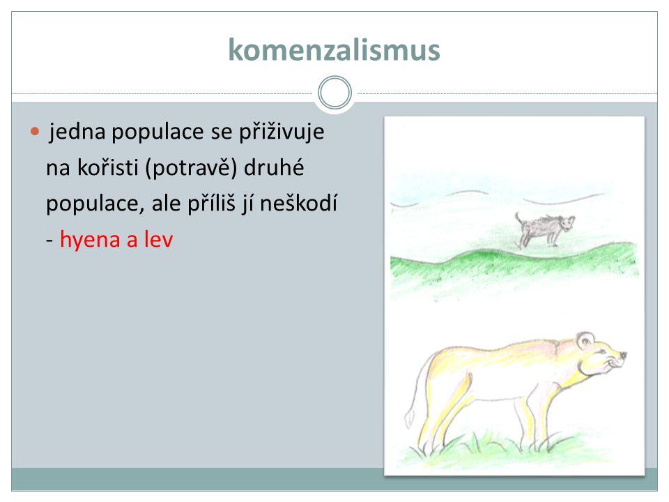 komenzalismus jedna populace se přiživuje na kořisti (potravě) druhé populace, ale příliš jí neškodí - hyena a lev