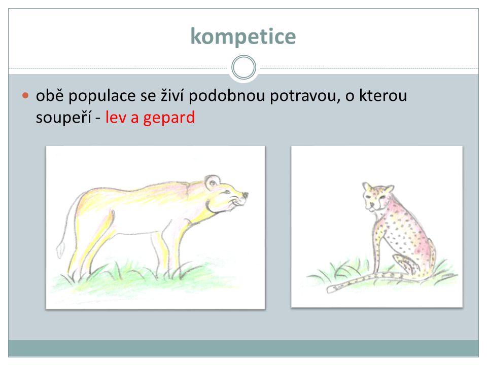 kompetice obě populace se živí podobnou potravou, o kterou soupeří - lev a gepard