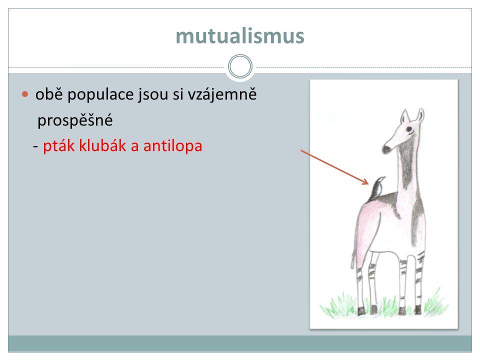mutualismus obě populace jsou si vzájemně prospěšné - pták klubák a antilopa