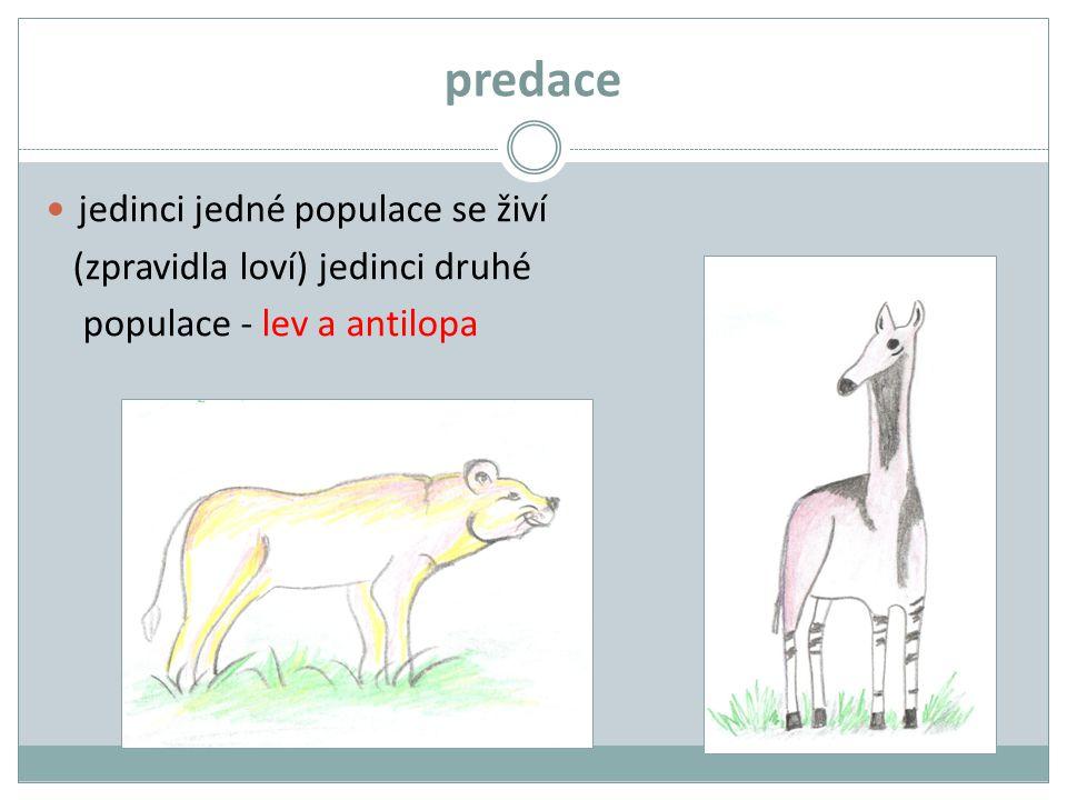 predace jedinci jedné populace se živí (zpravidla loví) jedinci druhé populace - lev a antilopa