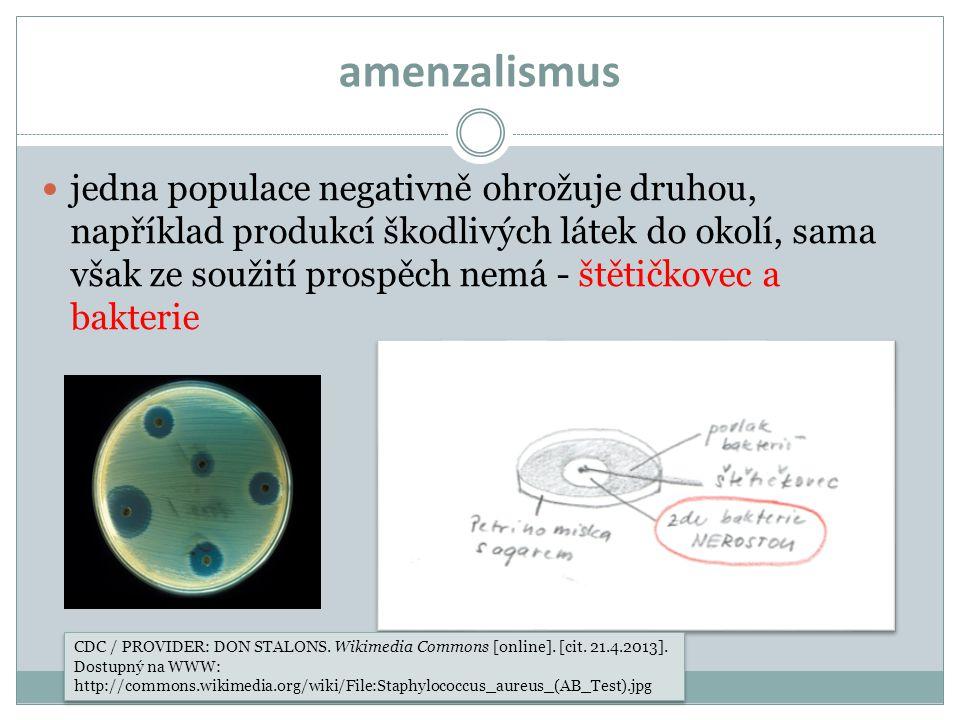 amenzalismus jedna populace negativně ohrožuje druhou, například produkcí škodlivých látek do okolí, sama však ze soužití prospěch nemá - štětičkovec