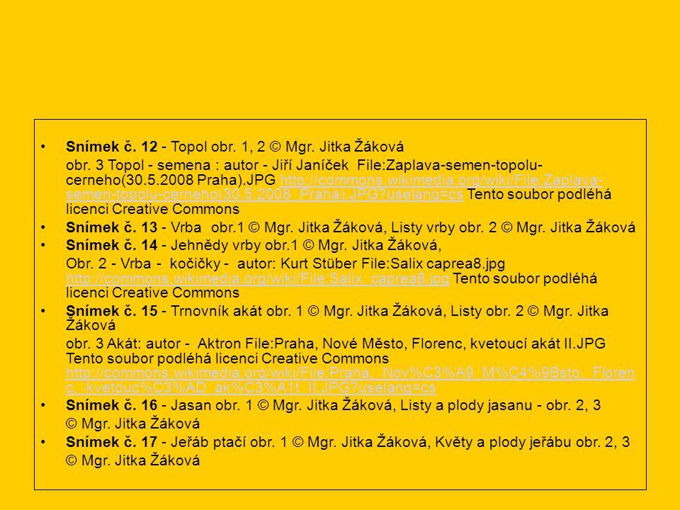Snímek č. 12 - Topol obr. 1, 2 © Mgr. Jitka Žáková obr. 3 Topol - semena : autor - Jiří Janíček File:Zaplava-semen-topolu- cerneho(30.5.2008 Praha).JP