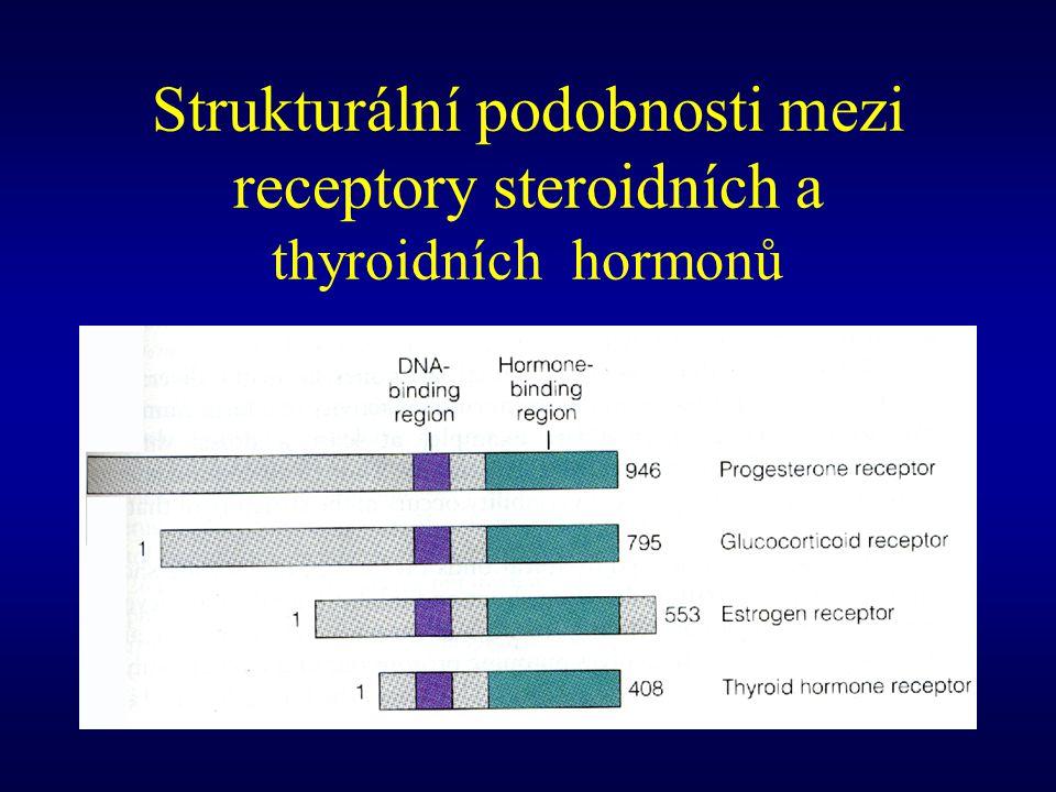 Strukturální podobnosti mezi receptory steroidních a thyroidních hormonů