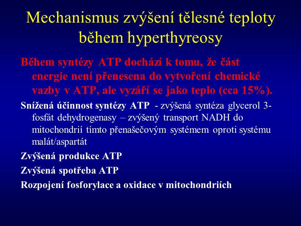 Mechanismus zvýšení tělesné teploty během hyperthyreosy Během syntézy ATP dochází k tomu, že část energie není přenesena do vytvoření chemické vazby v