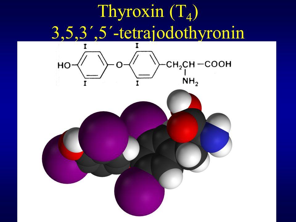 Mechanismus působení thyroidních hormonů Receptory pro thyroidní hormony jsou lokalizovány v jádře a jejich afinita je pro T 3 10x vyšší než pro T 4 Množství těchto nukleárních receptorů je v buňce velmi nízké Byly pozorovány čtyři varianty jaderného receptoru a byl popsán i mitochondriální receptor for T 3 Volný receptor thyroidního hormonu (TR) je vázán na hormone responsivní element DNA (HRE) a korepressor (CoR) Po navázání T 3 na receptor je CoR uvolněn a naopak se na celý komplex navazují koaktivátory (CoA) a některé další faktory a začne transkripce příslušného úseku DNA do mRNA