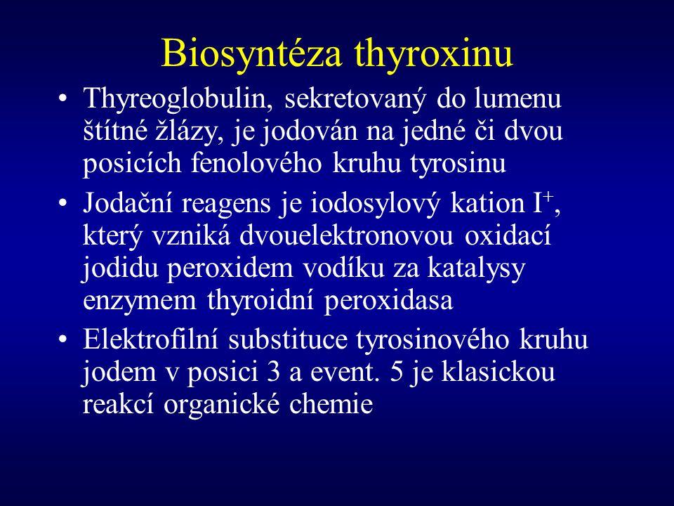 Biosyntéza thyroxinu Thyreoglobulin, sekretovaný do lumenu štítné žlázy, je jodován na jedné či dvou posicích fenolového kruhu tyrosinu Jodační reagen