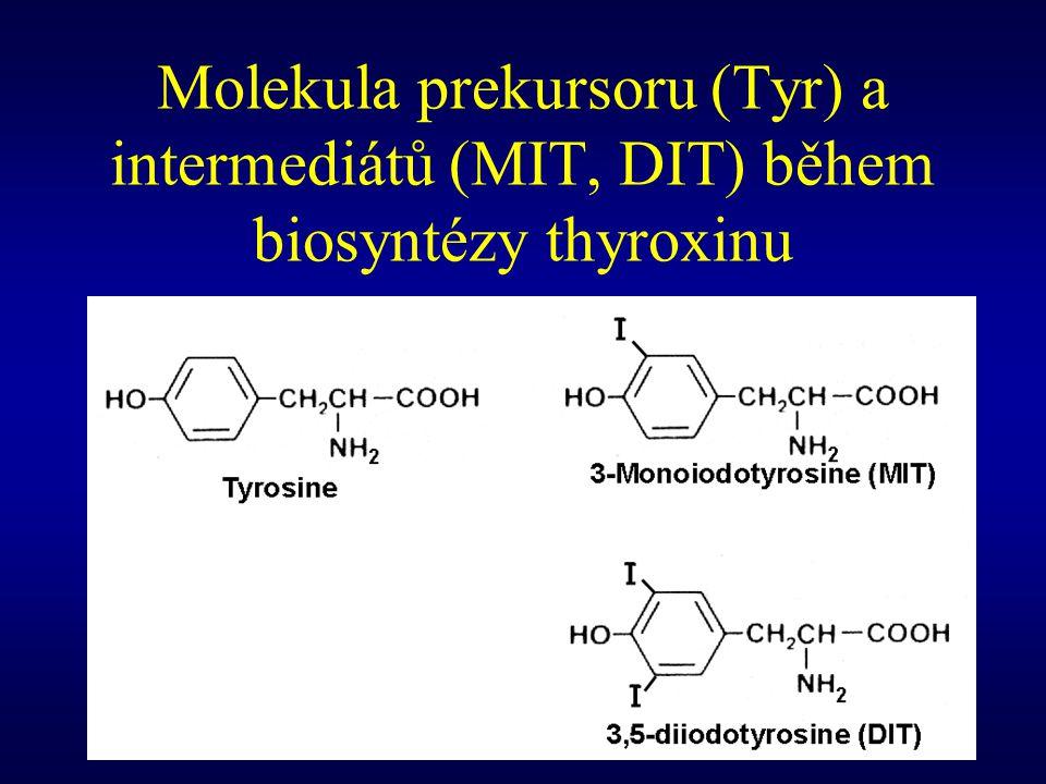 Biosyntéza T 4 z DIT Následná reakce DIT vede k vzniku radikálů DTT (jednoelektronová oxidace) s nepárovým elektronem : a) na kyslíku hydroxylové skupiny b) na uhlíku benzenovém kruhu v posici 1 Tyto radikály spolu reagují spolu a dochází k jejich kondensaci.