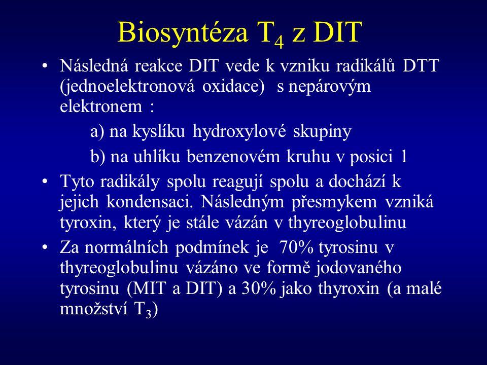 Biosyntéza T 4 z DIT Následná reakce DIT vede k vzniku radikálů DTT (jednoelektronová oxidace) s nepárovým elektronem : a) na kyslíku hydroxylové skup