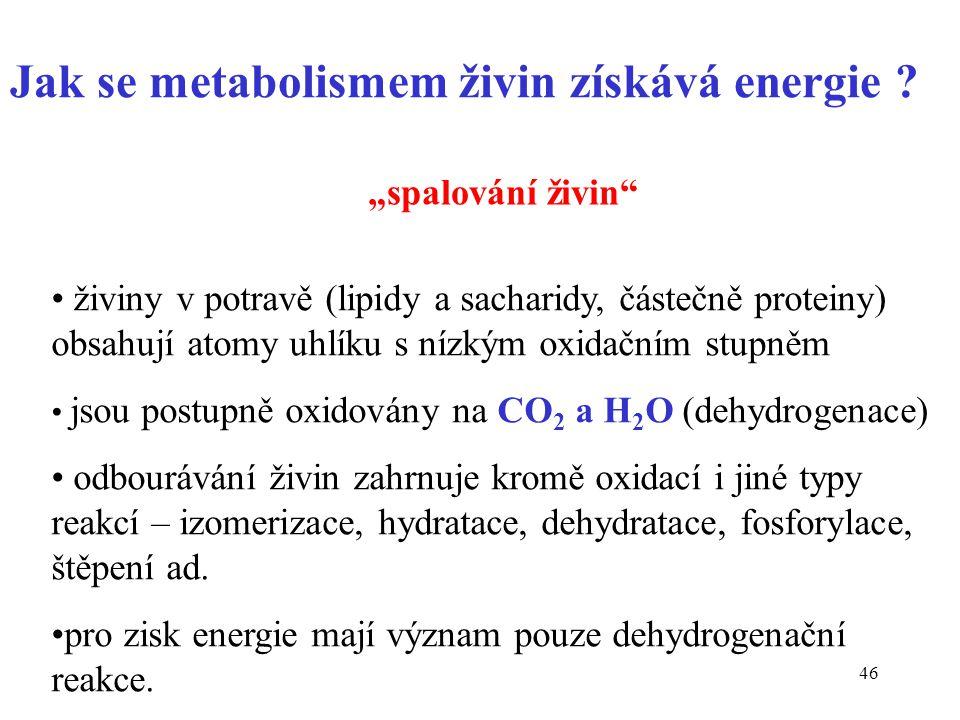 """46 Jak se metabolismem živin získává energie ? """"spalování živin"""" živiny v potravě (lipidy a sacharidy, částečně proteiny) obsahují atomy uhlíku s nízk"""