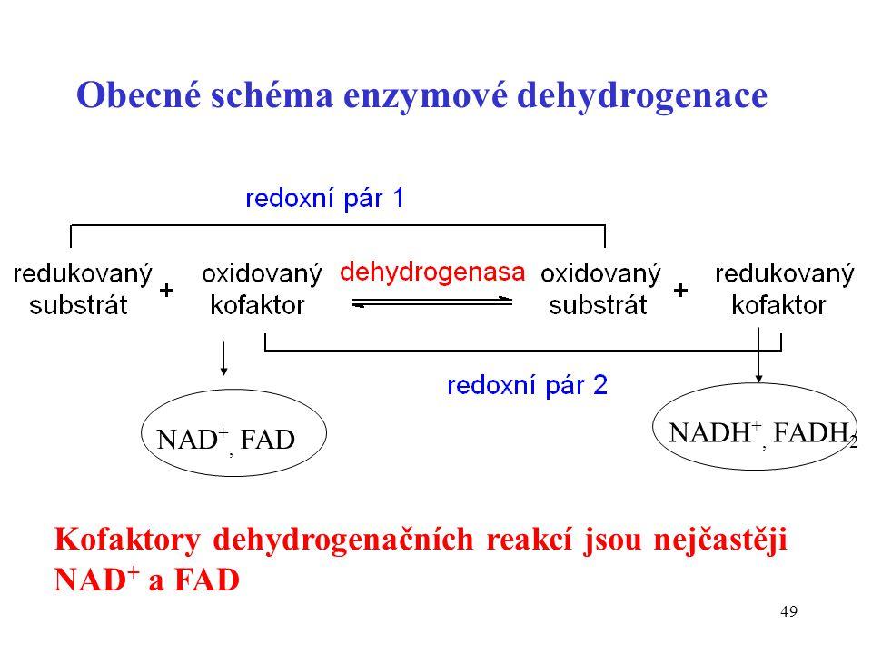 49 Obecné schéma enzymové dehydrogenace NADH +, FADH 2 NAD +, FAD Kofaktory dehydrogenačních reakcí jsou nejčastěji NAD + a FAD