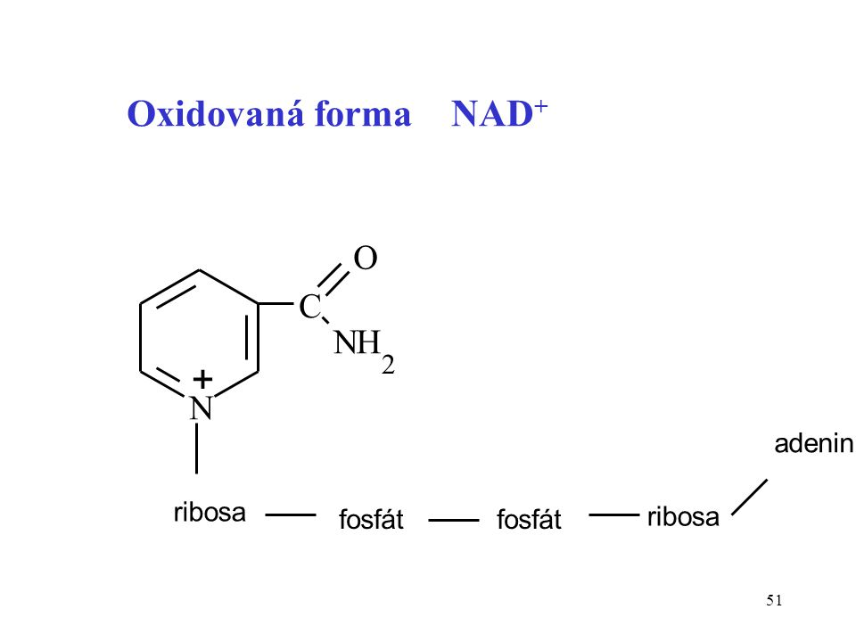 51 N C NH 2 ribosa fosfát ribosa adenin + O Oxidovaná forma NAD +