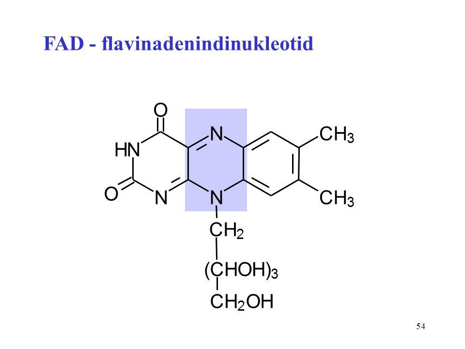 54 N N N N O O CH 3 CH 3 CH 2 H (CHOH) 3 CH 2 OH FAD - flavinadenindinukleotid