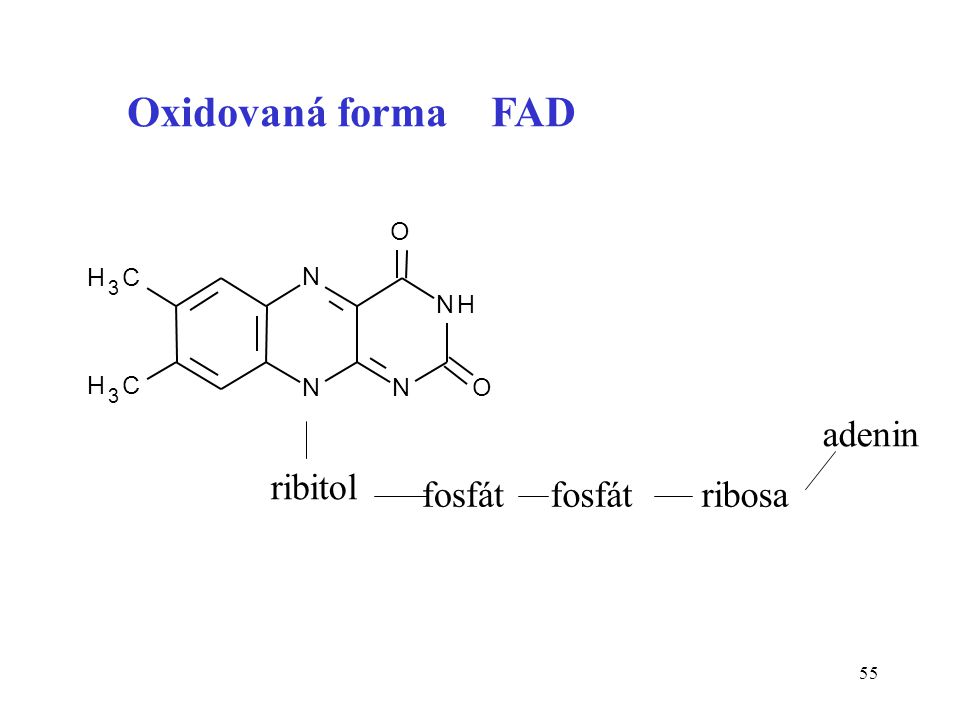 55 N NN NH H 3 C H 3 C O O ribitol fosfát ribosa adenin Oxidovaná forma FAD