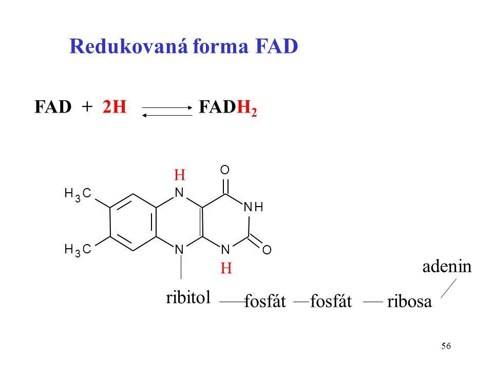 56 N NN NH H 3 C H 3 C O O Redukovaná forma FAD FAD + 2H FADH 2 H H ribitol fosfát ribosa adenin