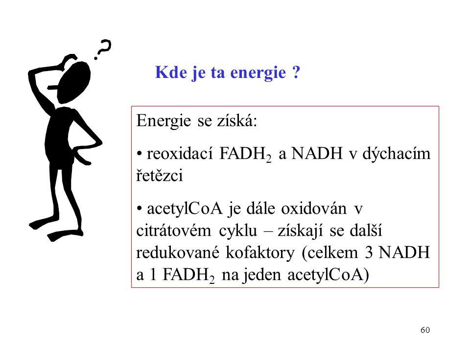 60 Kde je ta energie ? Energie se získá: reoxidací FADH 2 a NADH v dýchacím řetězci acetylCoA je dále oxidován v citrátovém cyklu – získají se další r