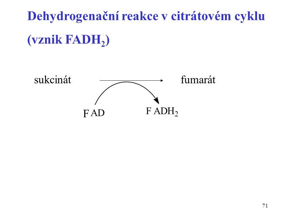 71 sukcinátfumarát F AD FAD H2H2 Dehydrogenační reakce v citrátovém cyklu (vznik FADH 2 )