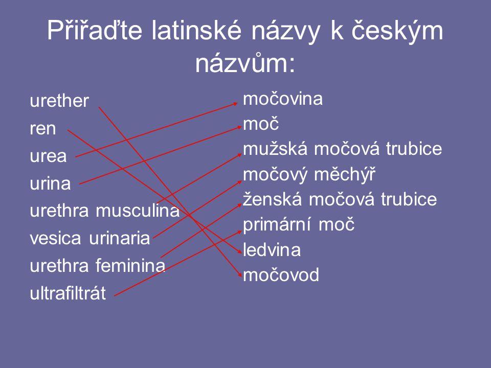 Přiřaďte latinské názvy k českým názvům: urether ren urea urina urethra musculina vesica urinaria urethra feminina ultrafiltrát močovina moč mužská močová trubice močový měchýř ženská močová trubice primární moč ledvina močovod