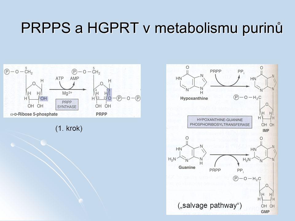"PRPPS a HGPRT v metabolismu purinů (""salvage pathway"") (1. krok)"