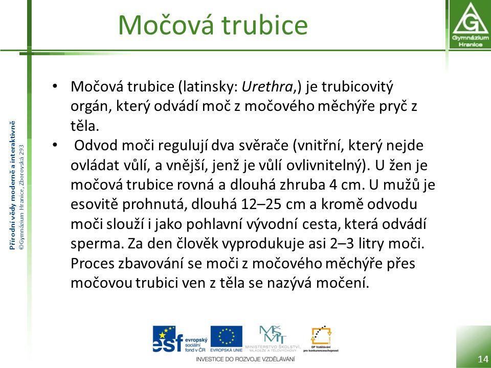 Přírodní vědy moderně a interaktivně ©Gymnázium Hranice, Zborovská 293 Močová trubice Močová trubice (latinsky: Urethra,) je trubicovitý orgán, který