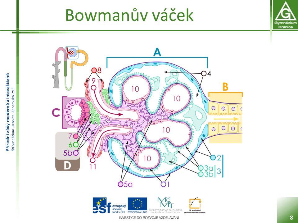 Přírodní vědy moderně a interaktivně ©Gymnázium Hranice, Zborovská 293 Bowmanův váček 8